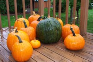 pumpkin colors orange white blue red pumpkins