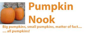 pumpkin, nook, recipes