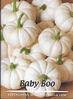 baby, boo, seeds, variety, miniature
