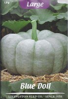 blue, doll, varieties,variety, seed, images, pumpkins