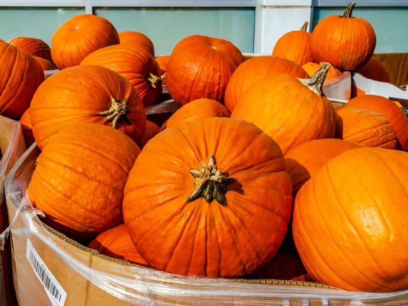 box of pumpkins