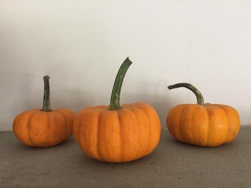 Jack Be Little Pumpkins