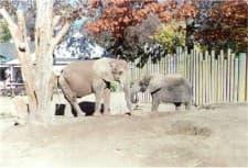 Elephant Pumpkins 02