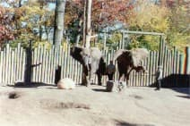 Elephant 05