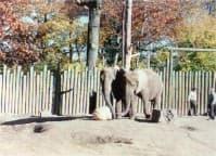 Elephant Pumpkin 06