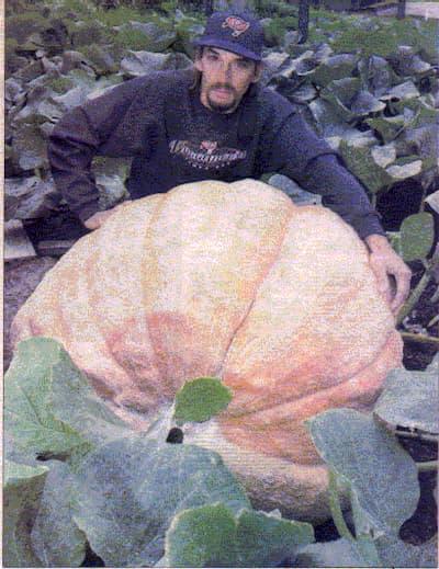 Giant Pumpkin Sawtelle
