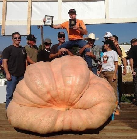 Giant Pumpkins Mathison 2032
