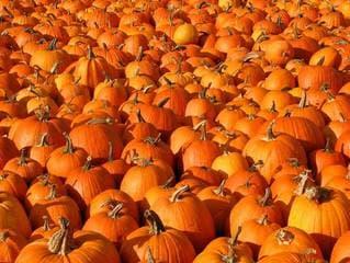 Pumpkins Multiple