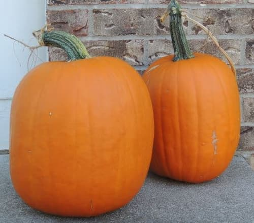 Pumpkins Two