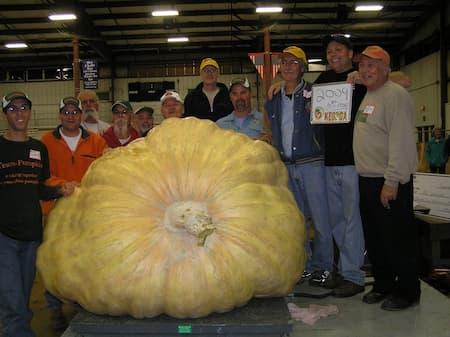 Giant Pumpkin Wallace 2009
