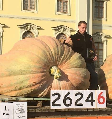 Giant Pumpkin Willemijns 2624